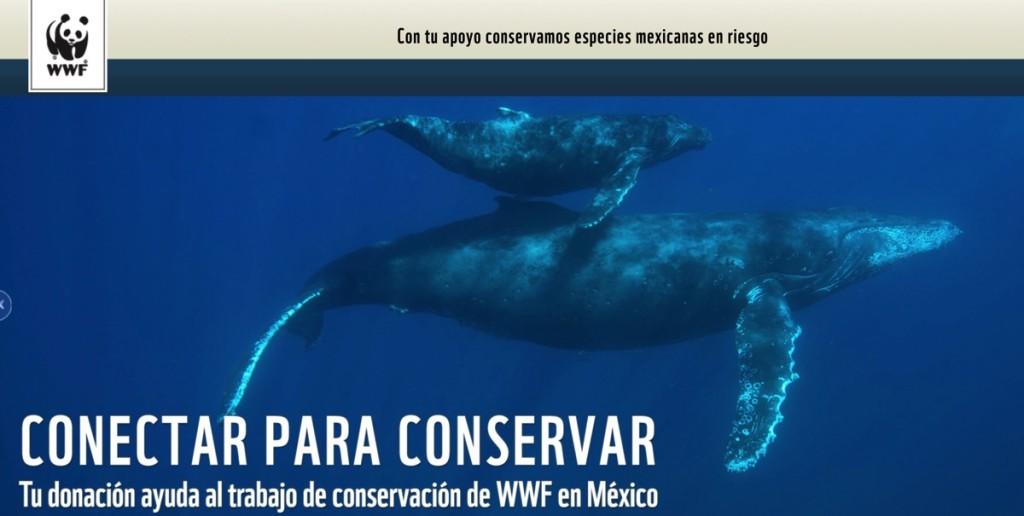WWF-Donativo-QueridoDinero