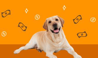 Cómo proteger a tu perro de un accidente