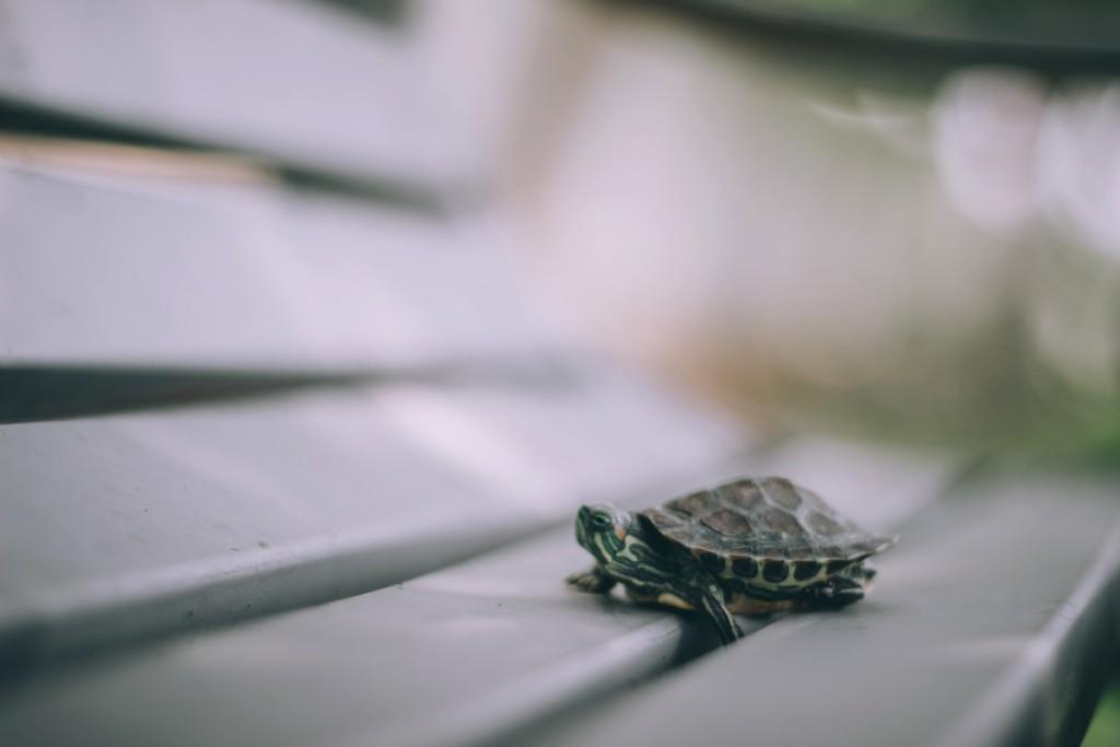 Tortuguita-small